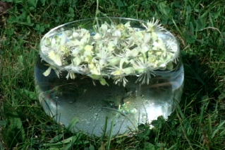 making-clematis-bowl