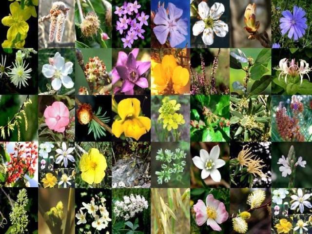 sistema-floral