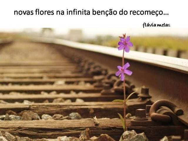 novas flores na infinita benção do recomeço...